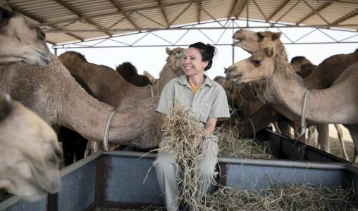 Как бизнеса с камили в ОАЕ се превърна в индустрия за милиони